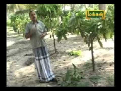 my dad in makkal tv about coco plant VTS_01_1~1.mov