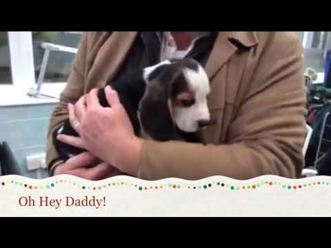 Picking up the NEW PUPPY BEAGLE!
