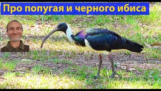 Думаете завести попугая Природа Австралии. видео 173