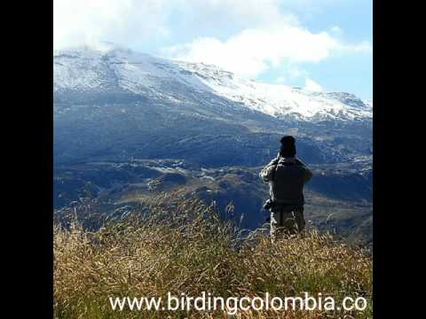 Birding Tours in Colombia / Birdwatching Colombia