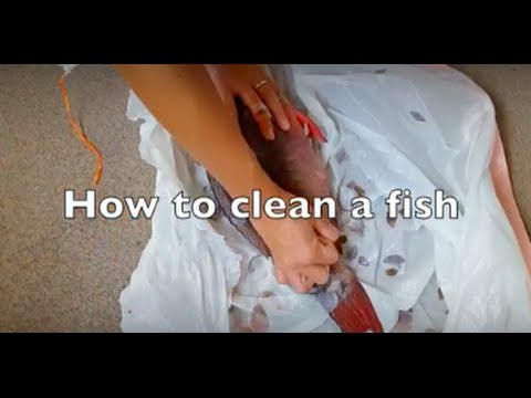 How to clean a fish, when you never have before!