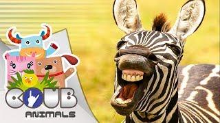 Смешные видео про животных #9 | COUB | Приколы с животными