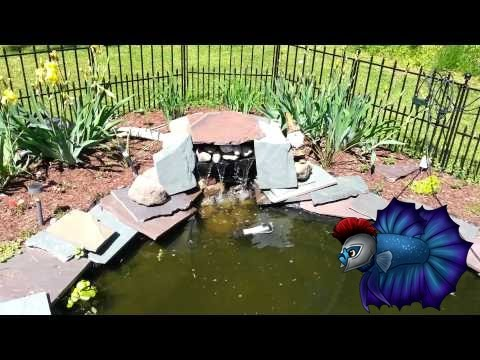 Benefits Of A UV Sterilizer In A Pond