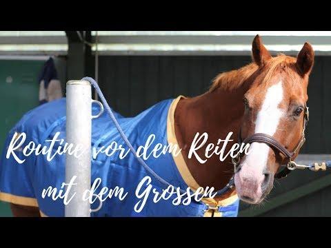 🦄 Routine vor dem Reiten beim alten Pferd feat. dem Großen I Cowgirlupblog