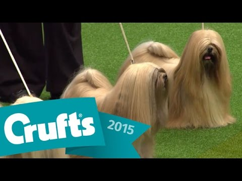 Kennel Club Breeders Competition Final Judging | Crufts 2015