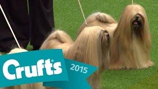 Popular Videos - Kennel club
