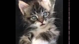 Fur Baby Rescue