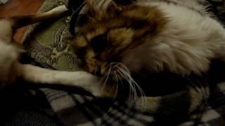 Как назвать котят? Малыш кошачий папа.