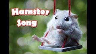 Hamster Song [Pikusiowa Piosenka] #Chomik