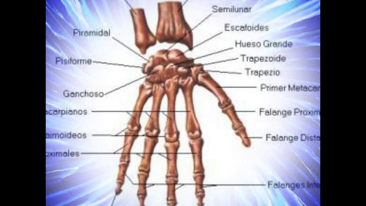 El Cuerpo Humano: El Cuerpo Humano Y Sus Partes 1607