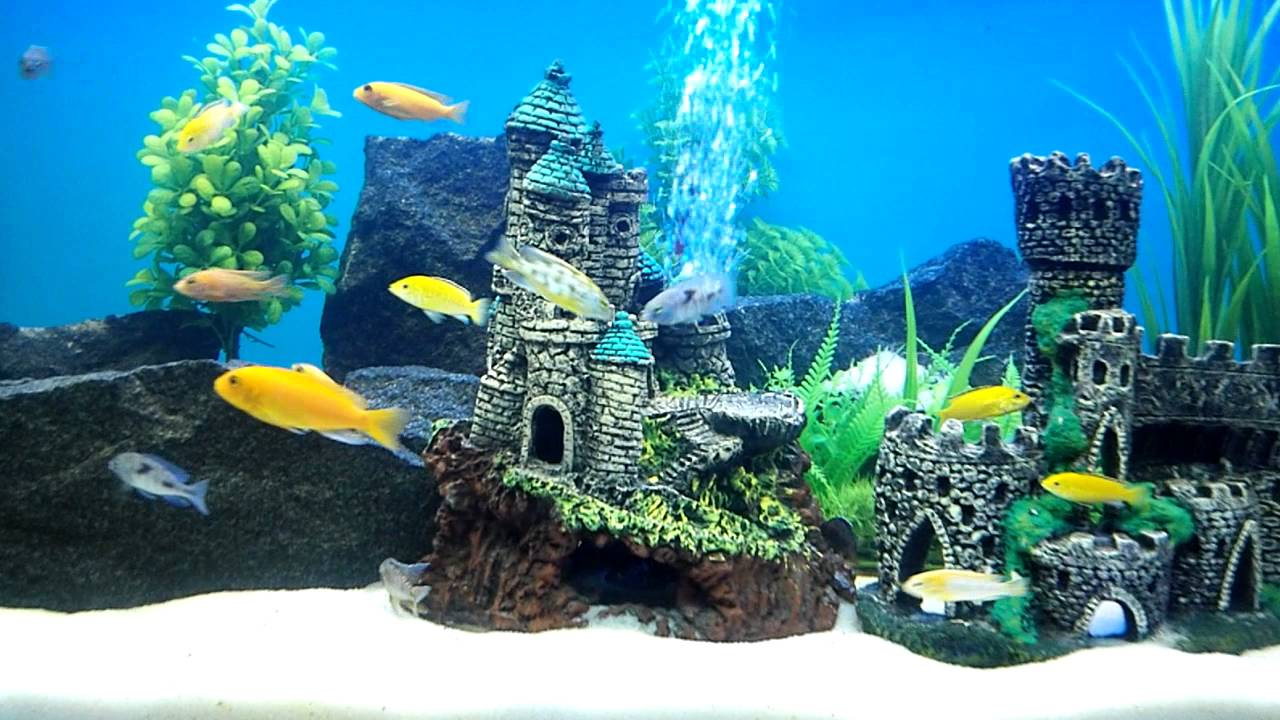 African cichlids fish tank 160 gallon 600 litre for Decoration aquarium 60 litres