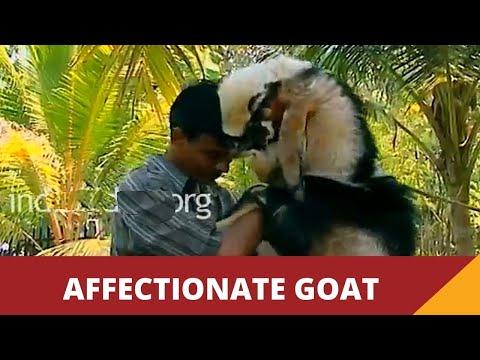 Curious Cheetah Cubs Climb on Kim | Man, Cheetah, Wild from YouTube · Duration:  2 minutes 31 seconds