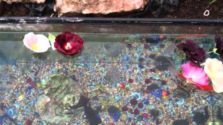 Rescued Fish And Aquarium: Summer Outdoor Decorating Ideas