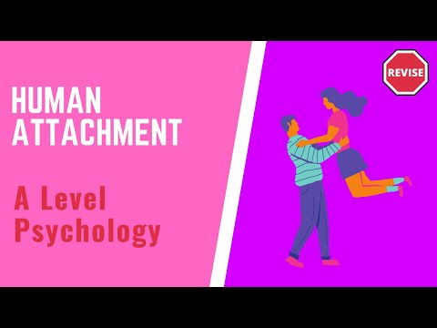 As Psychology - Human Attachment