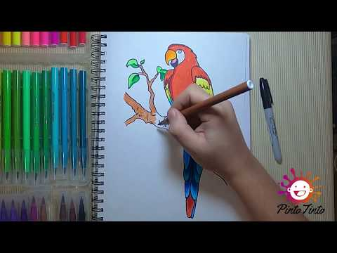 como-#dibujar-y-#pintar-una-guacamaya---how-to-#draw-and-#paint-a-macaw