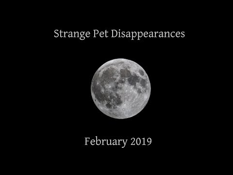 A Collection of Strange Pet Disappearances in the Wilderness - Feb. 2019