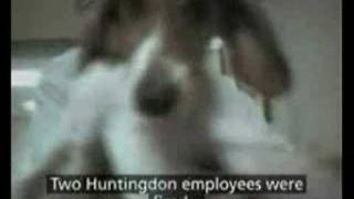 Dog Tortured - British Animal Testing