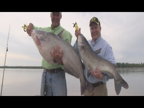 Video Mississippi catfishing