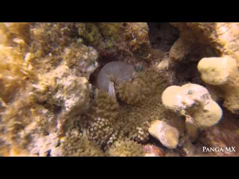 Amenome Eating Fish, British Virgin Islands