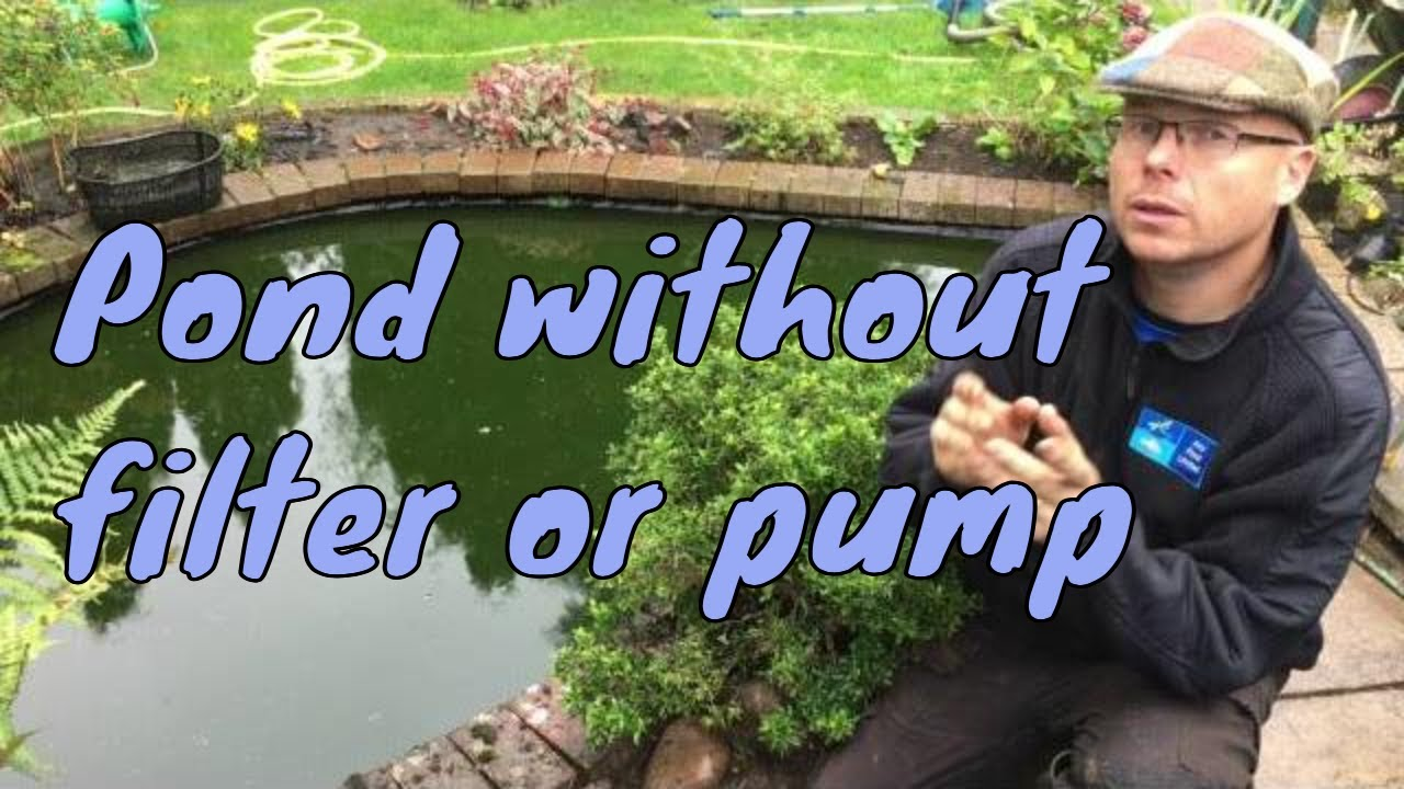 Do I Need A Filter On My Fish Pond Youtube