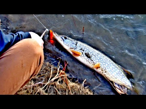 Fishing In The South Saskatchewan River | Big Pike