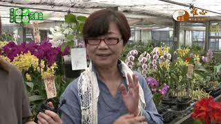 吳家與蘭花的邂逅【甜園交響曲13】| WXTV唯心電視台