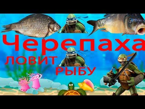 Ниндзя черепаха ловит рыбок Bubafish Улыбчивый Кот 0+