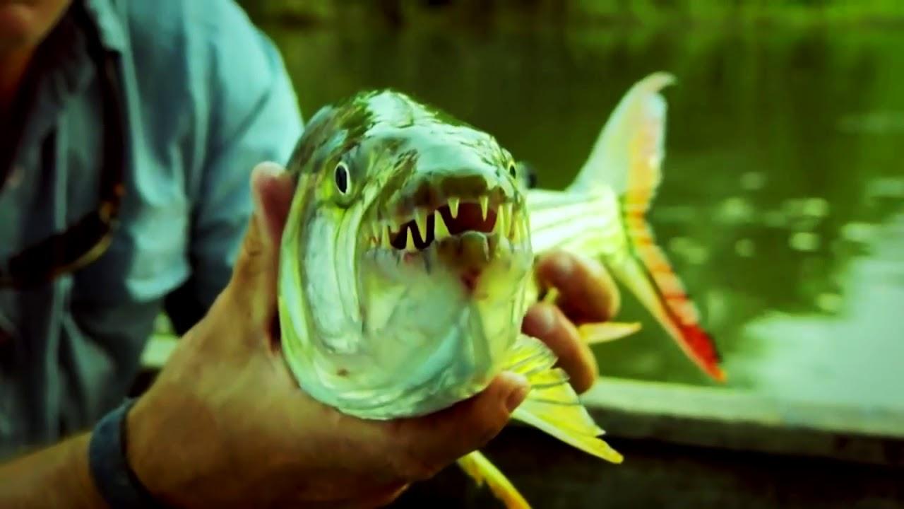 Рыбалка на монстров с джереми уэйдом
