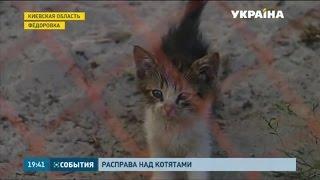 Полсотни мёртвых и десятки замученных котят нашли под Киевом