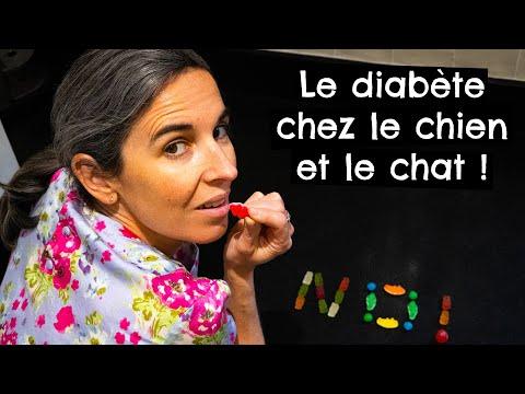 Le Diabète Chez Le Chien Et Le Chat !
