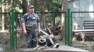 Дрессировка собак - полная версия