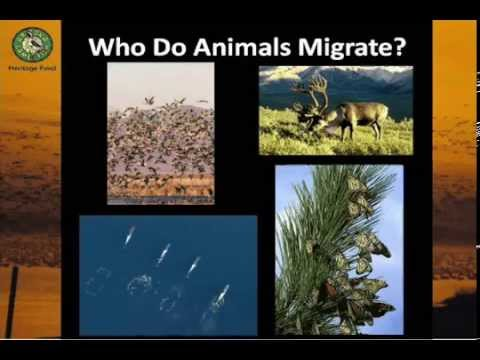 Know No Boundaries: Amazing Wildlife Migrations