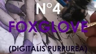 Foxglove Speedpaint Video