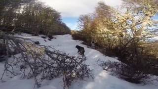 Patagonia Birding: The Trail
