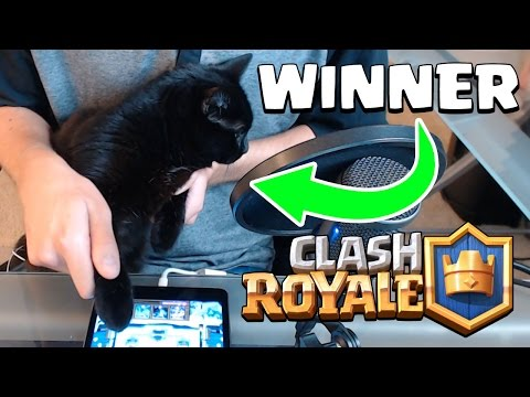 Clash Royale | MY CAT WINS THE GAME | Funny Cat VS Cat Battle