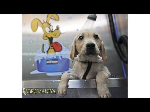 Собаки щенки картинки - o-
