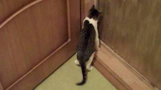 поставил кота в угол