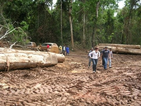 tt1  TIMBER PROCESSING EXPERIENCE  CONGO BASIN