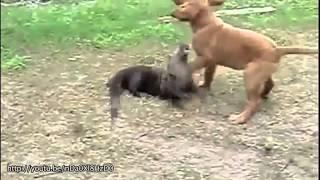 Najlepsi przyjaciele zwierzęta, śmieszne