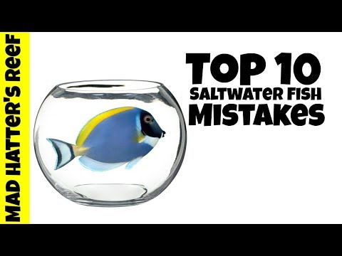 Top 10 Saltwater Fish Mistakes