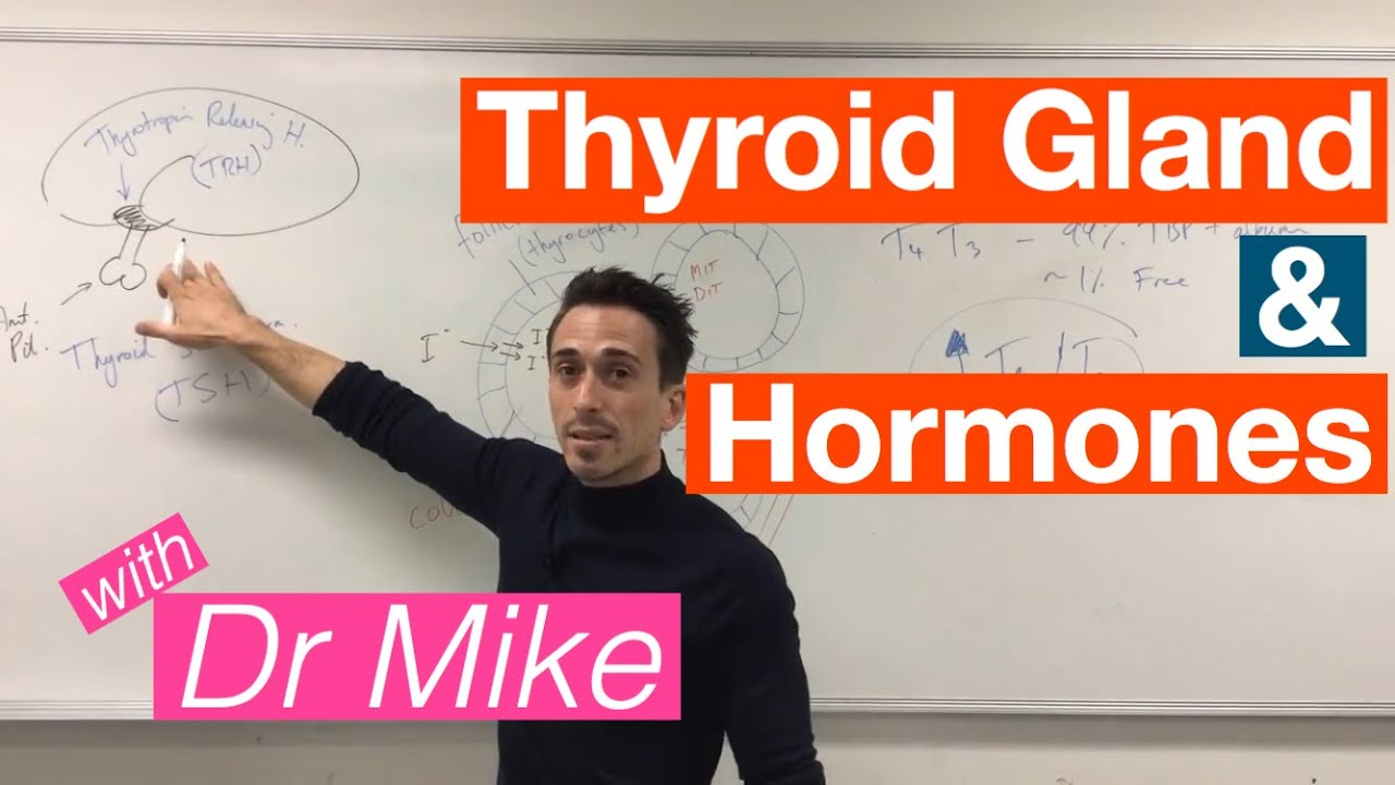Thyroid Gland And Hormones Youtube