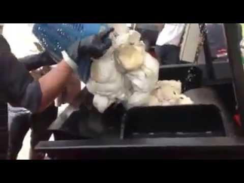 YIPTA Crepe - เครื่องรีดยางเครป - ก.ค 2556 / 2