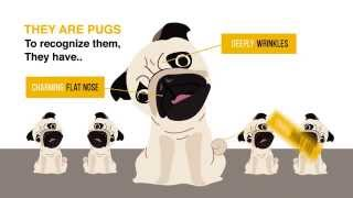 Facts About Pugs
