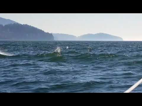Catalina 36 (Skoal) meets boardsailor Andreas enjoying high wind sailing near Post Point Bellingham