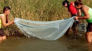 Amazing Fishing In Pailin - How To Catches Fishs - Cambodia Traditional Fishing (part 204)