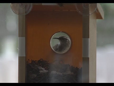 My Spy Birdhouse Update- Birds Move In | EpicReviewGuys in 4k CC