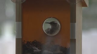My Spy Birdhouse Update- Birds Move In | Epicreviewguys In 4k