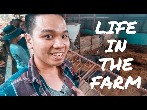 Life at a Farm in the Philippines: A Break From The City