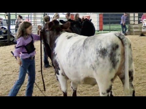 Open / Jr Beef Show (Showmanship Classes) - 2016 W.C. Fair