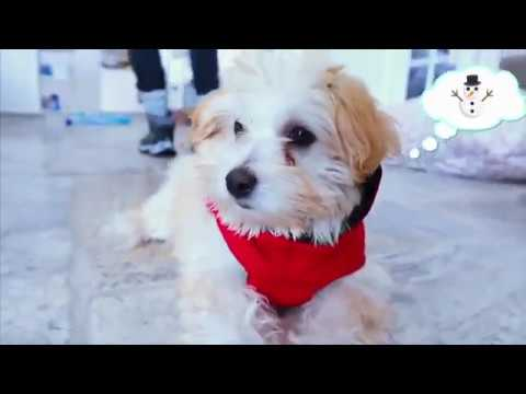 SNOW DAY Official Puppy Music Video